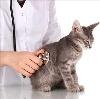 Ветеринарные клиники в Вельске